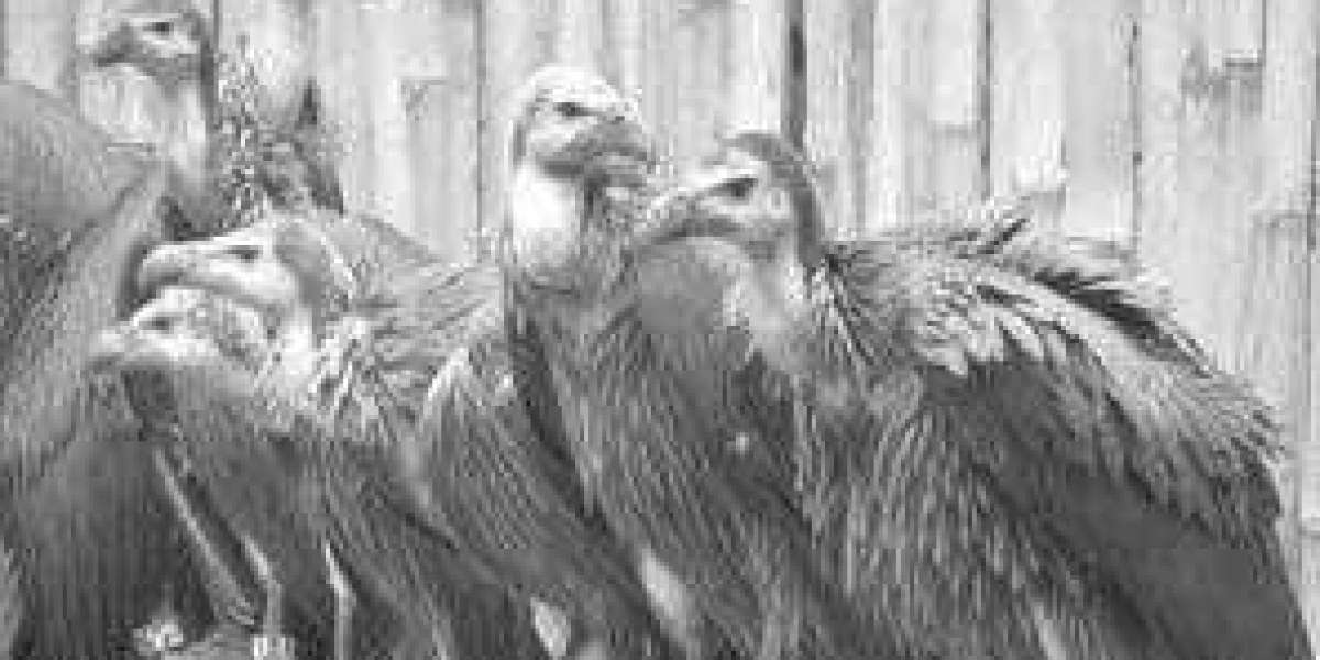 Vultures In Eagle's Clothing Download Full Version Book Zip